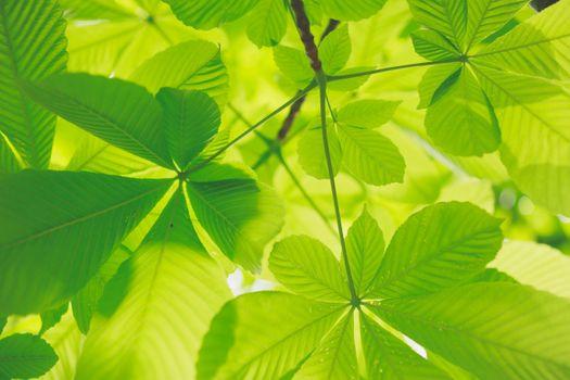 Заставки зеленые, листья, природа