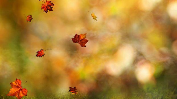 Photo free fall, leaves, boke