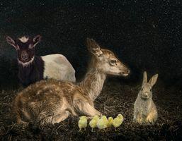 Фото бесплатно Олень, кролик, коза
