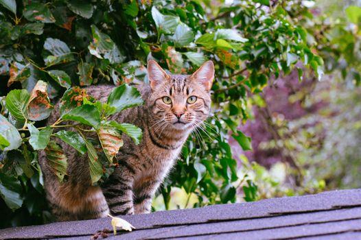 Photo free tabby cat, standing, street