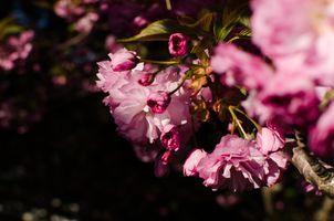 Фото бесплатно цветы, дерево, бесплатные изображения