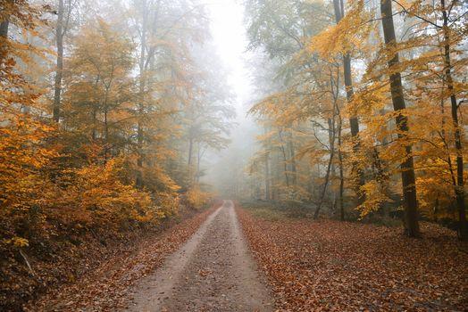Photo free autumn paints, morning, autumn