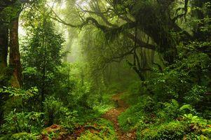 Бесплатные фото лес,деревья,туман,тропинка,пейзаж