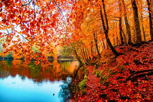The most beautiful photo of autumn, park, pond