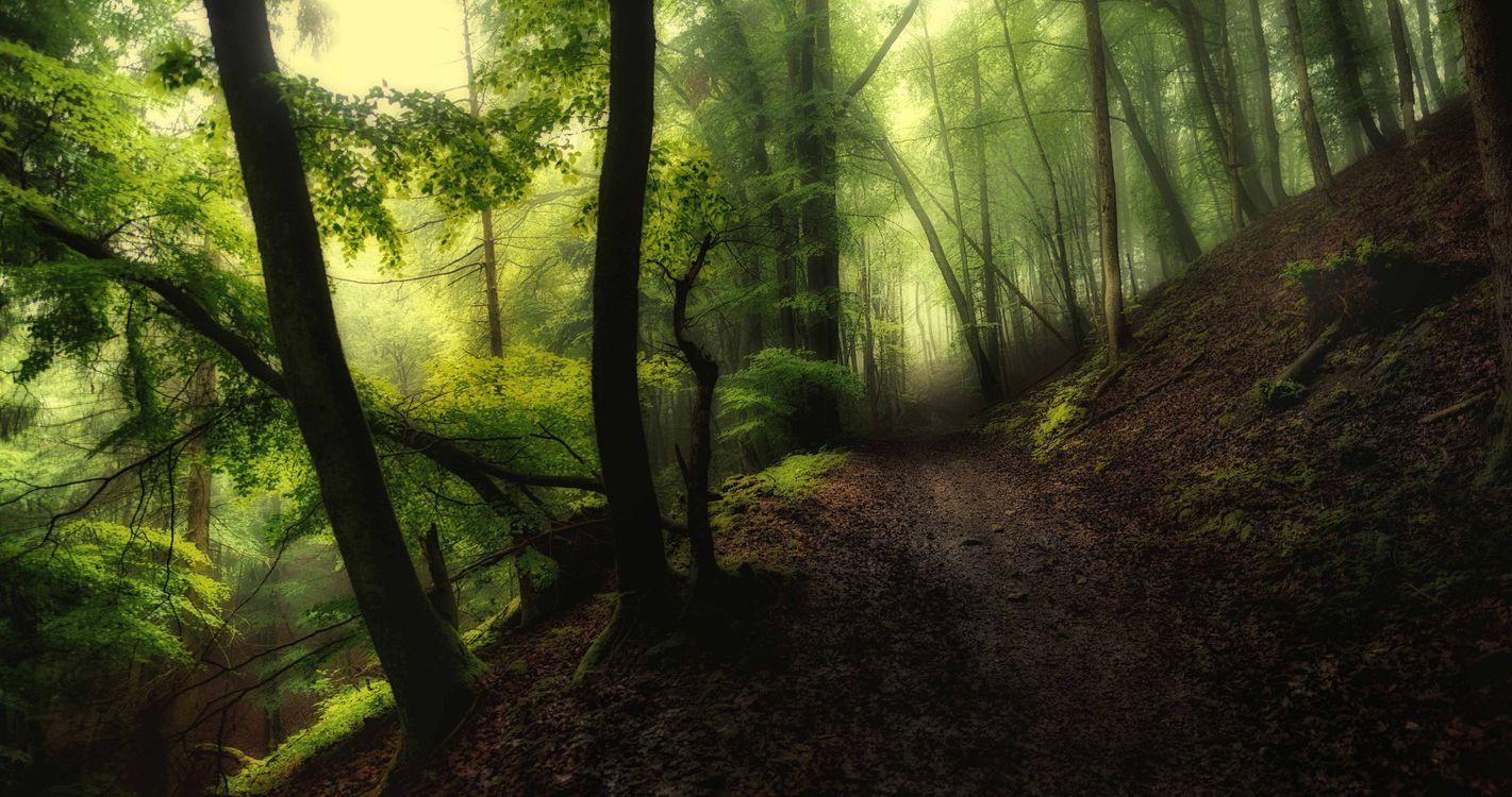 Обои лесная дорога, туман, пейзаж картинки на телефон