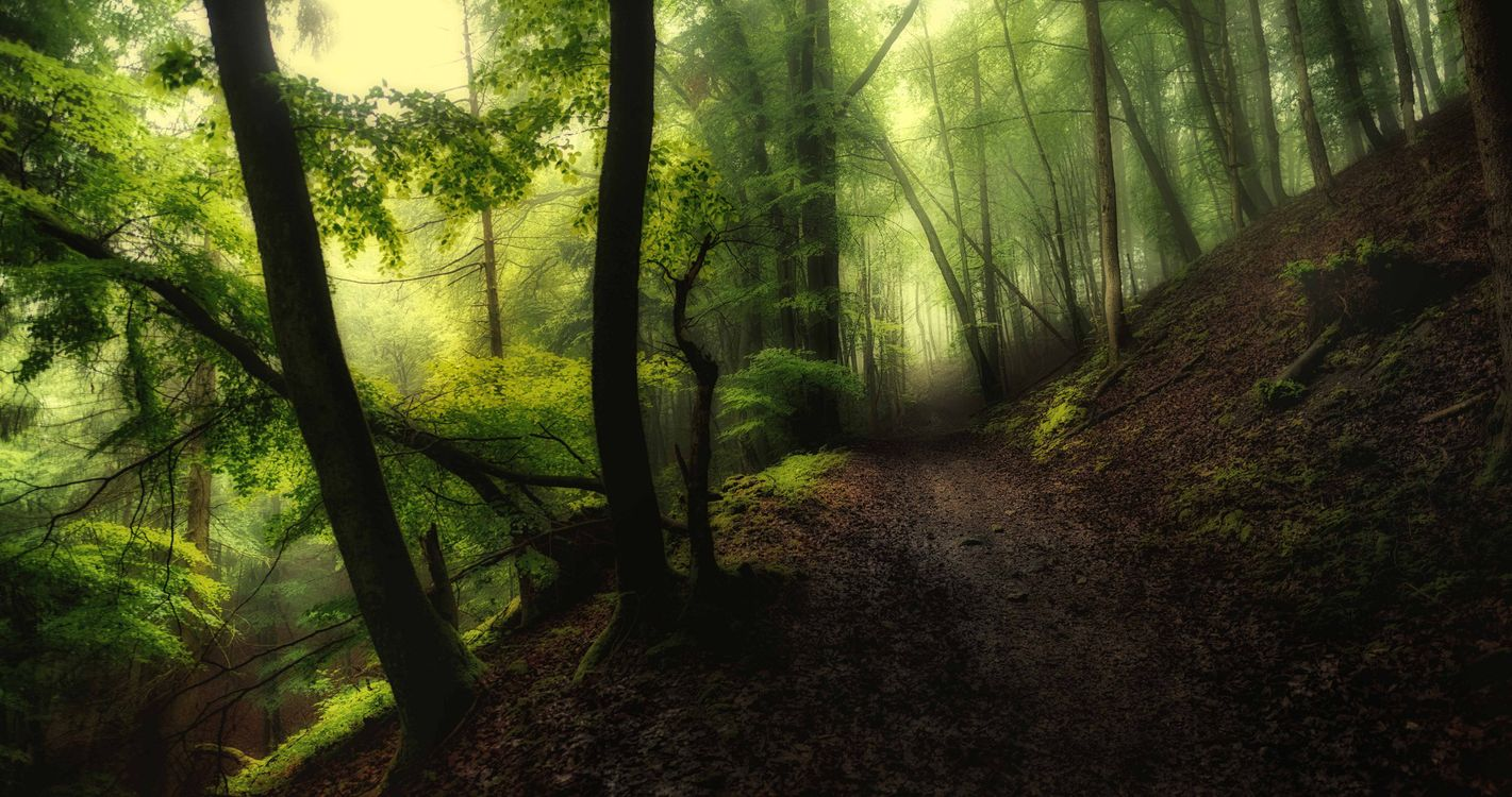 Обои туман, лес, деревья картинки на телефон