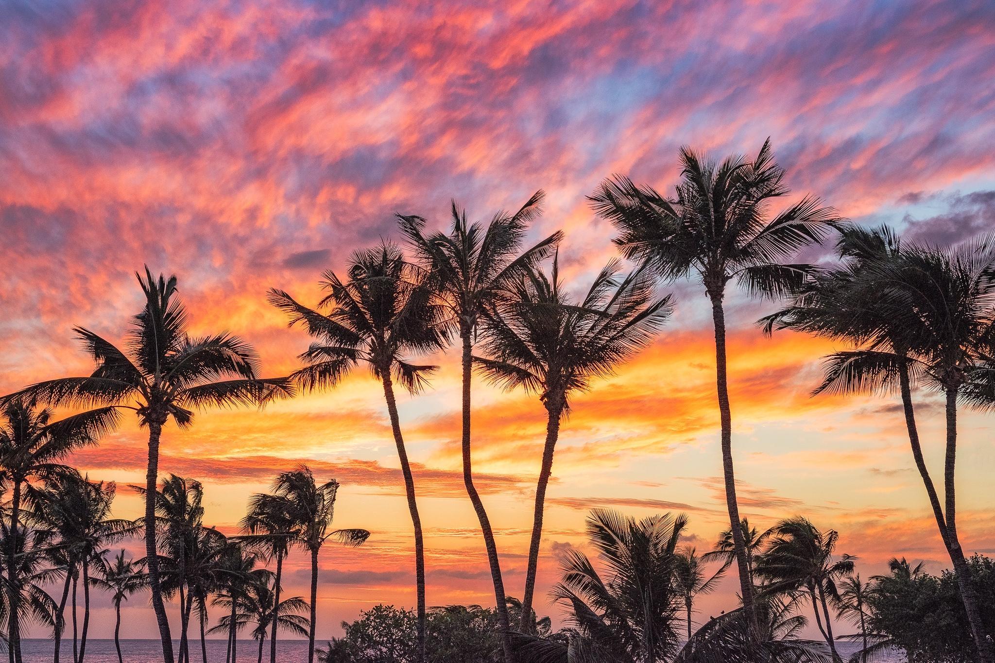 Hawaii, закат, пальмы