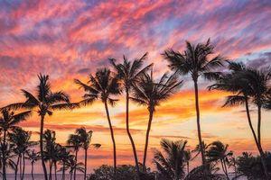 Бесплатные фото Hawaii, закат, пальмы, пейзаж