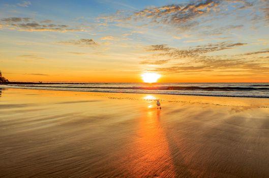 Фото бесплатно закат, пляж, чайки