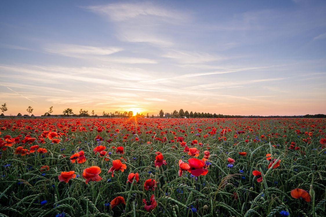 картинки про цветочные поля сад знаменитый