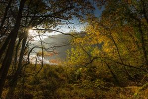 Фото бесплатно озеро, закат, лес