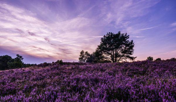 Заставки Закат, поле, лаванда
