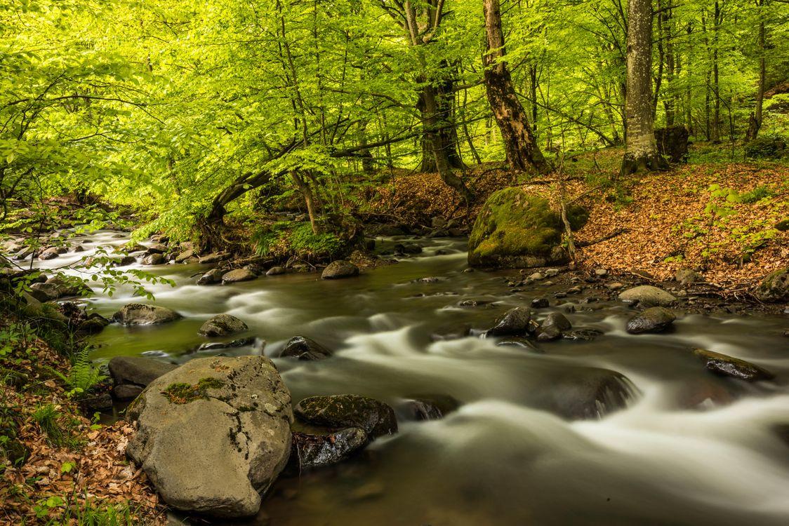 Фото бесплатно река, лес, деревья - на рабочий стол