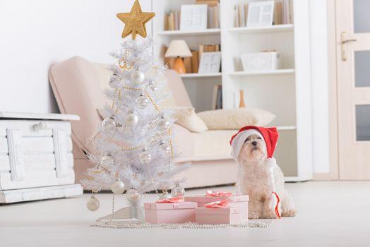 Фото бесплатно собака, рождество, год