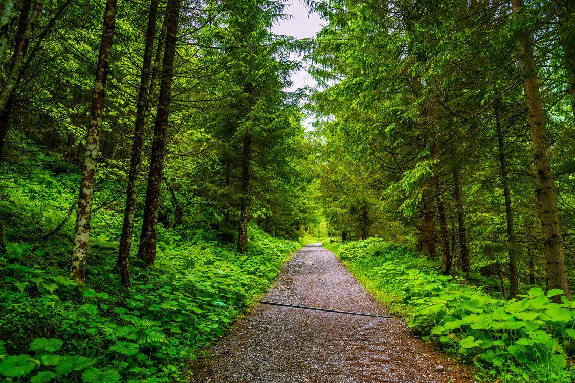 Фото бесплатно пейзаж, лесная дорога, дорога - на рабочий стол