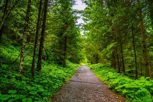 Фото бесплатно пейзаж, лесная дорога, дорога