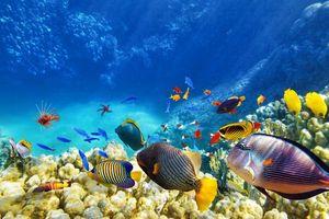 Фото бесплатно море, рыбы, кораллы