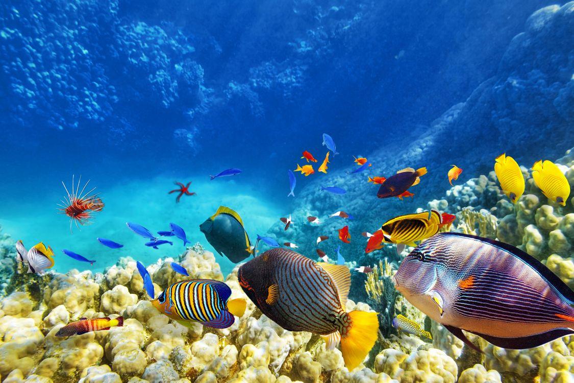 Фото бесплатно море, рыбы, кораллы - на рабочий стол