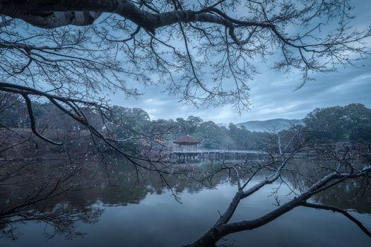 Photo free Nara park, Japan, autumn