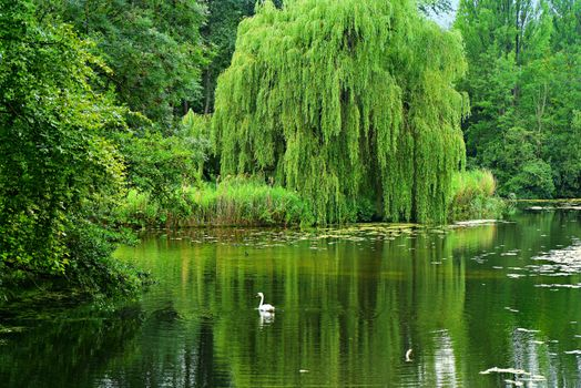 Photo free weeping willow, pond, water
