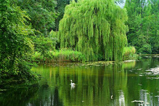 Фото бесплатно плакучая ива, пруд, вода
