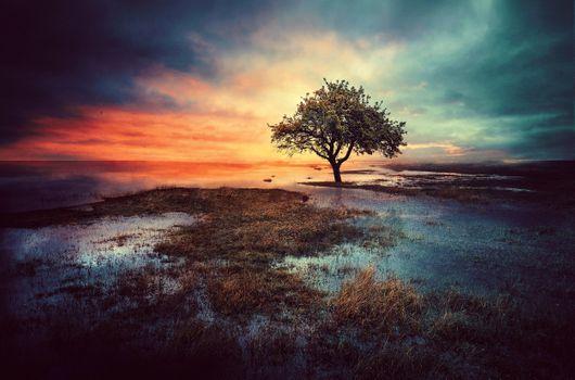 Photo free sunset, field, single tree
