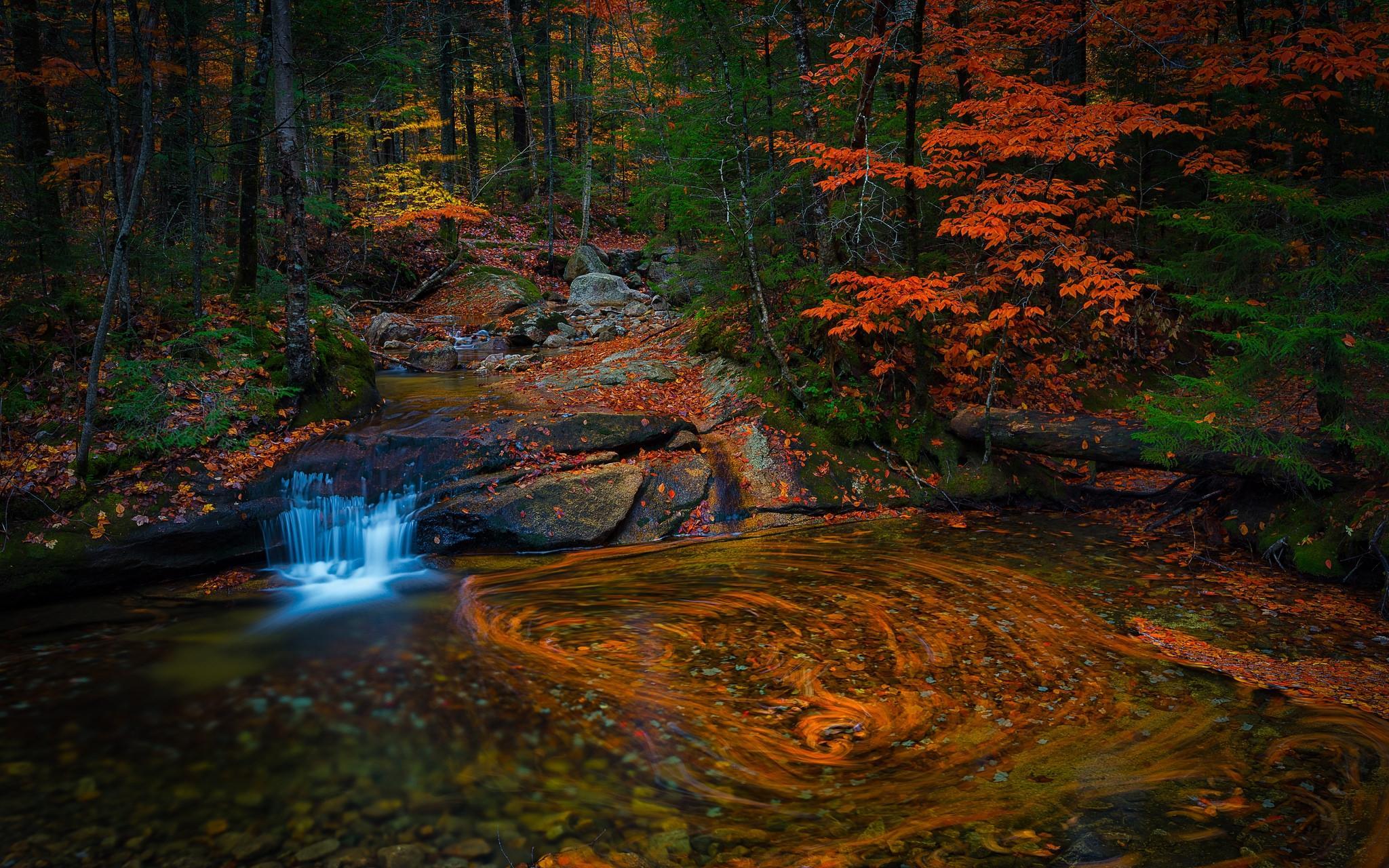 Обои осень, лес, деревья, водопад