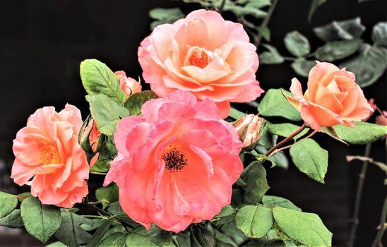 Фото бесплатно флора, ветка, букет