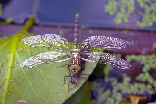 Фото бесплатно насекомые, макросъемка, стрекозы крупным планом