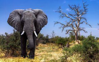 Большой слон · бесплатное фото