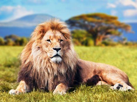 Фото бесплатно отдых, грива, царь