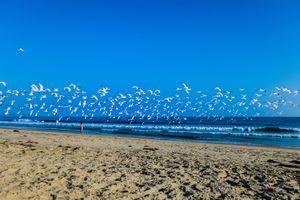 Фото бесплатно чайки, птицы, море