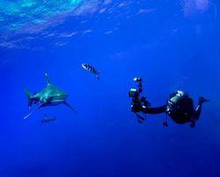 Фото бесплатно Морские обитатели, Акулы, Акула