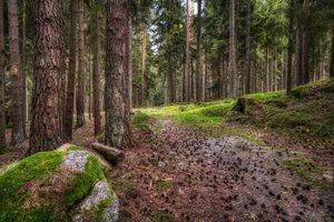 Фото бесплатно природа, Германия, леса
