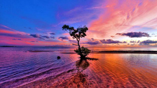 Фото бесплатно растения, дерево, море