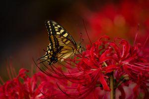 Бесплатные фото цветок, бабочка, насекомое