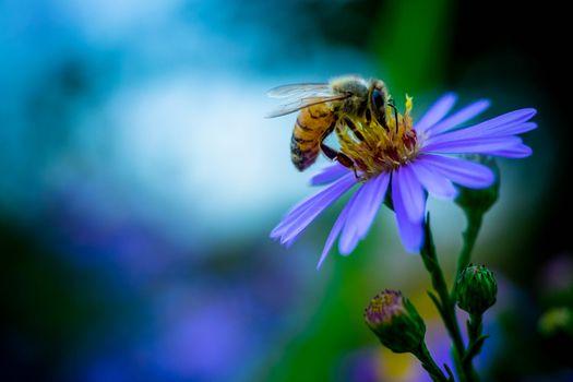 Photo free flower, bee, plant