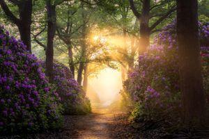 Бесплатные фото рододендрон,цветы,дорожки,путь,солнце,деревья,растения