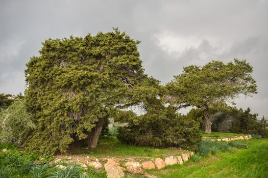 Фото бесплатно деревья, камни, темные облака