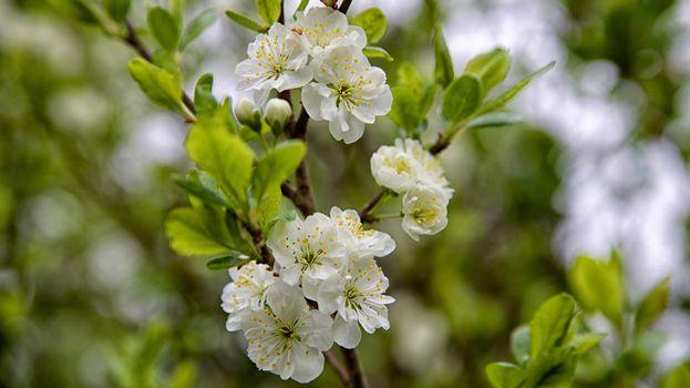 Бесплатные фото ветка,весна,цветение,цветы,флора