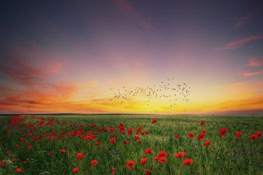 Фото бесплатно небо, стая птиц, цветы