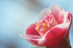 Фото бесплатно цветения, цветочное поздравление, цветы