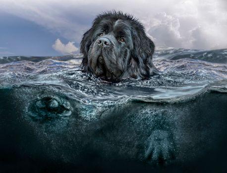 Заставки собака, море, волны