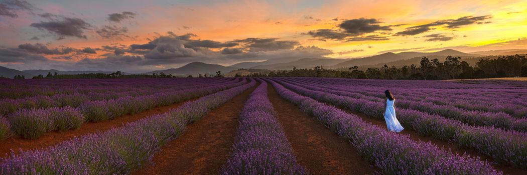 Photo free lavender field, view, sunset