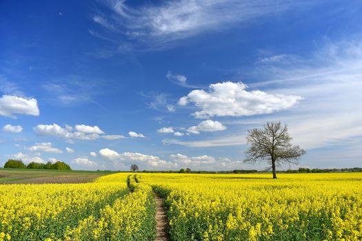 Photo free The municipality of siauliai district, Lithuania, field