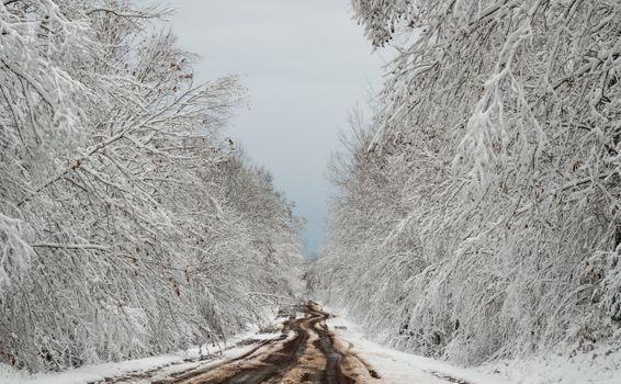 Фото бесплатно грязь, дорога, деревья