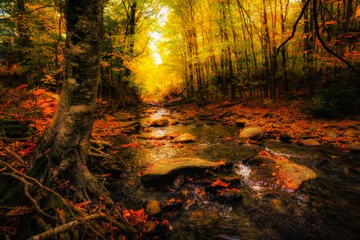 Фото картинки река, осень