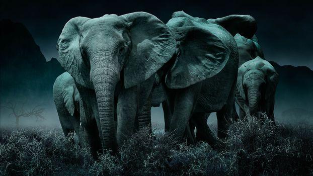 Фото бесплатно ночь, слоны, стадо