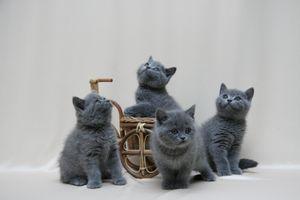Фото бесплатно кошка, котята, усы