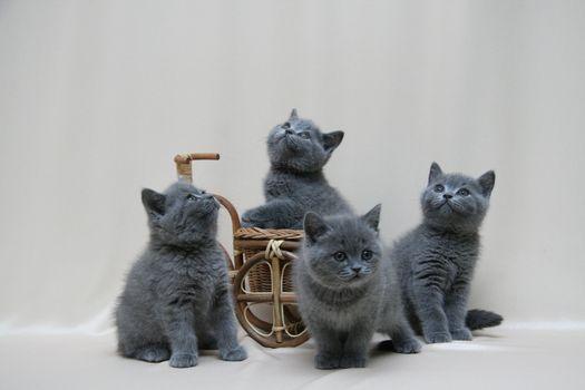 Заставки кошка, котята, усы